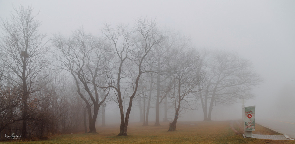 Lost-in-the-haze.jpg