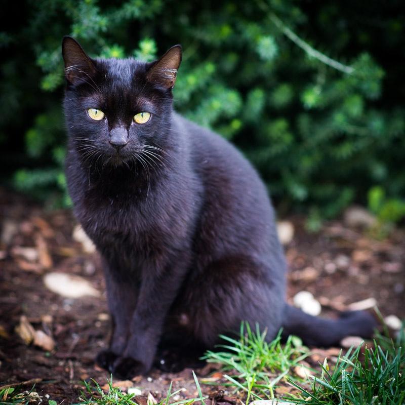 OksanART_Cat.jpg