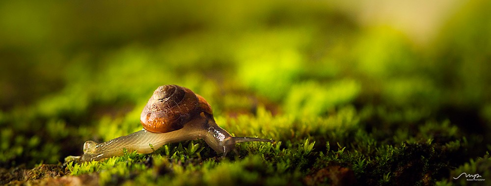 purity-of-nature-snail.jpg