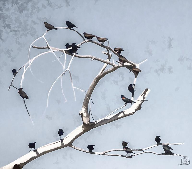 Birds-on-Limb2.jpg