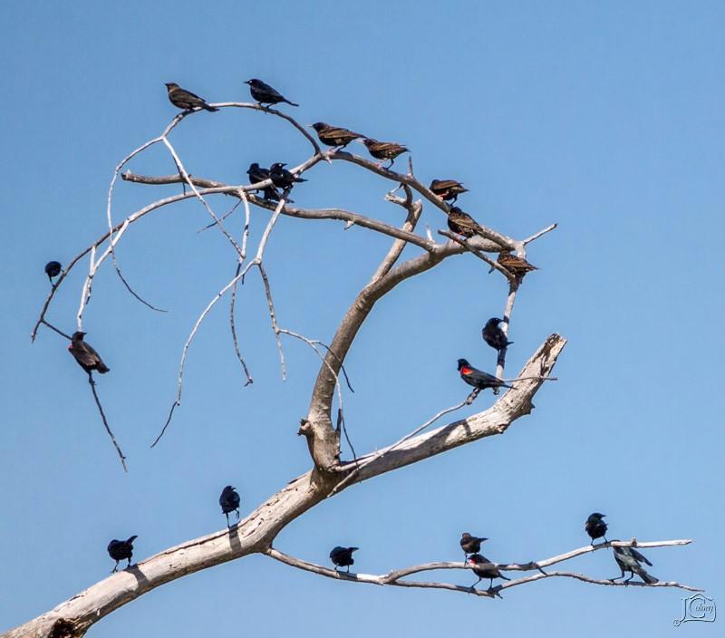 Birds-on-limb.jpg