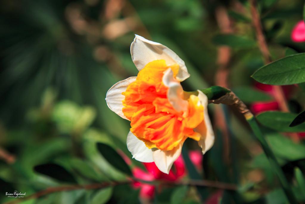 Gage-Park-Spring-Flower-Show-2.jpg