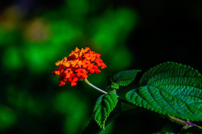 Flower51.jpg