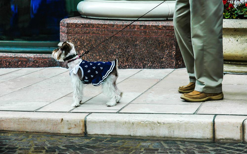 walking-the-dog-1-Mandrake.jpg