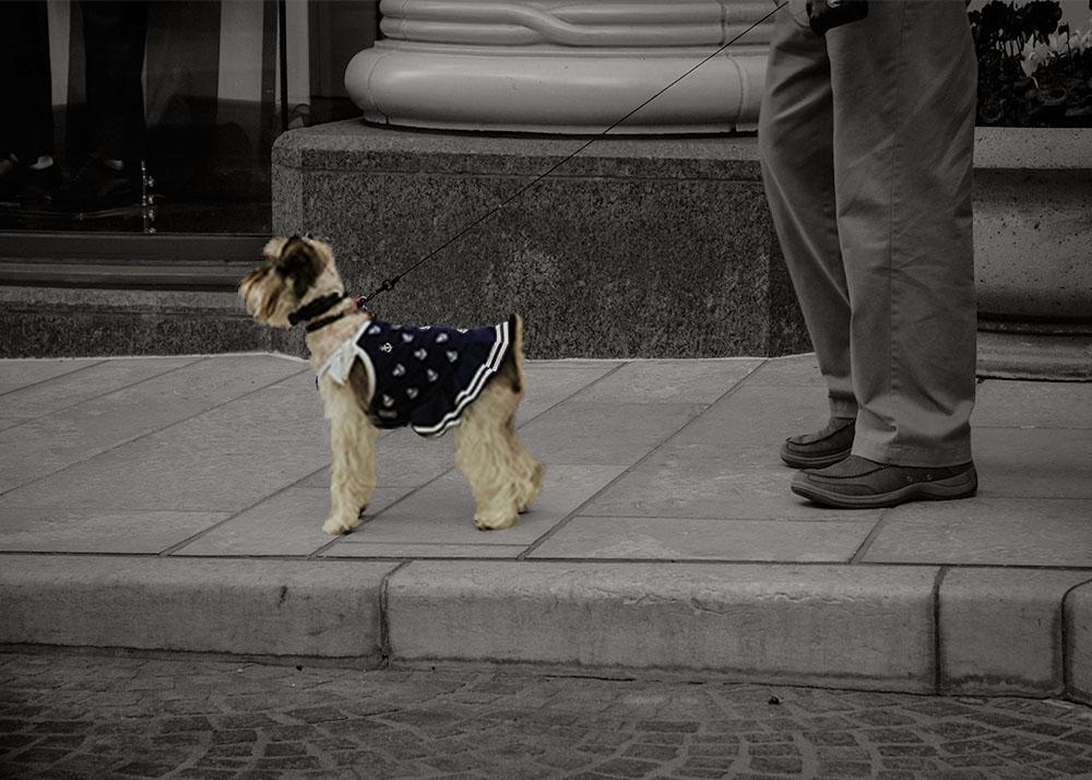 BW-dog-copy.jpg