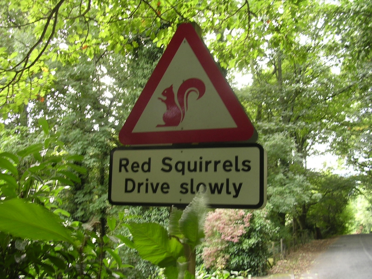 Red_squirrels_warning_signs_Lake_District.jpg