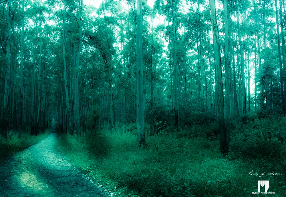 purity-of-nature-vayanad-forest.jpg
