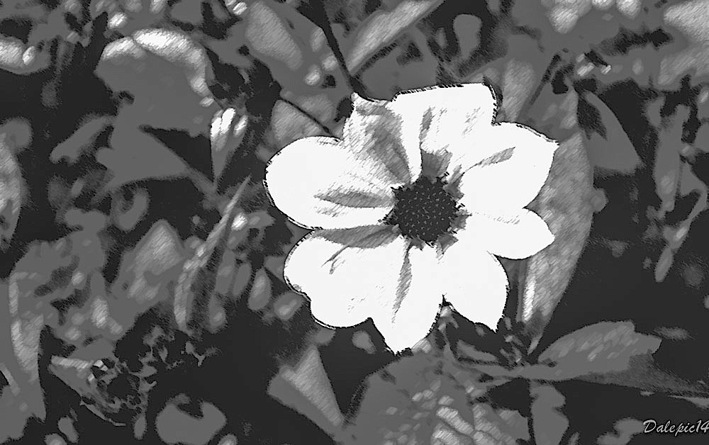 DSC_1861-copy-copy4-2.jpg