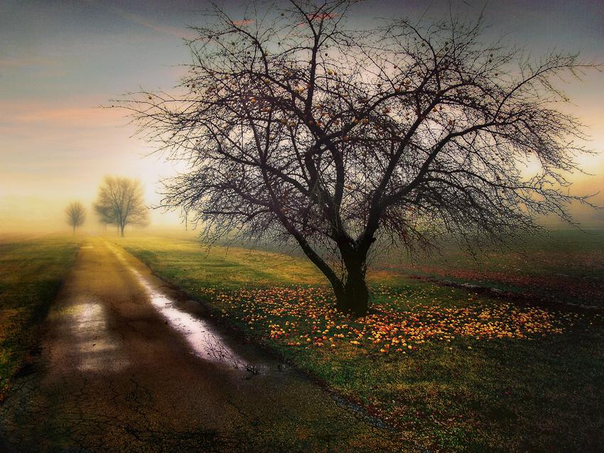 Apple-Tree-1.jpg