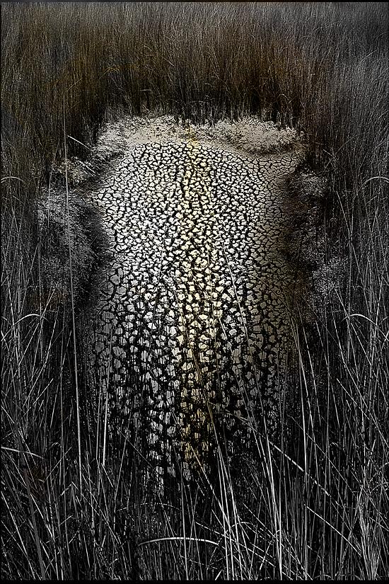 Dried-Marsh.jpg