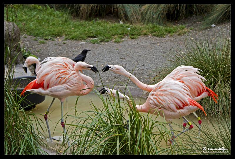 https://easy-exposure.com/wp-content/uploads/2012/08/1p72f-Flamingo_zoo.jpg
