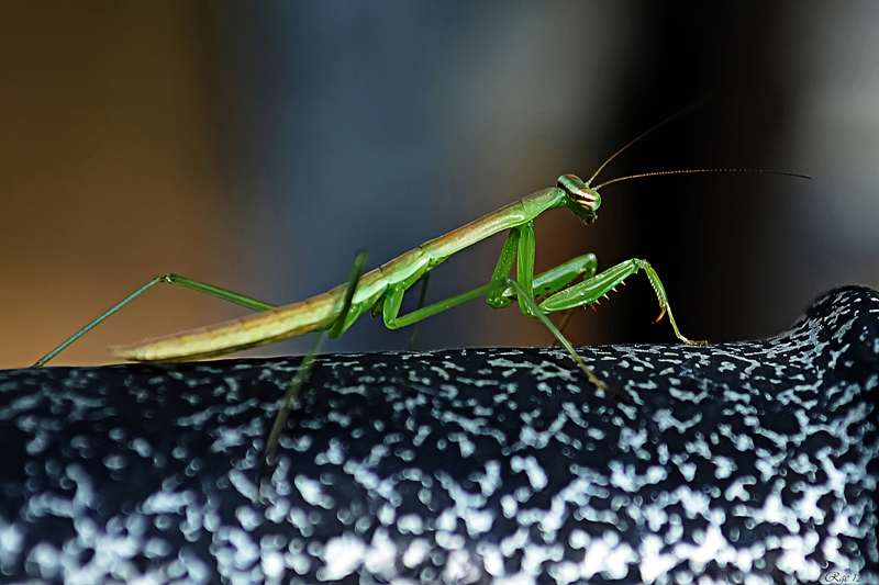https://easy-exposure.com/wp-content/uploads/2012/09/m8p2c-Mantis.jpg