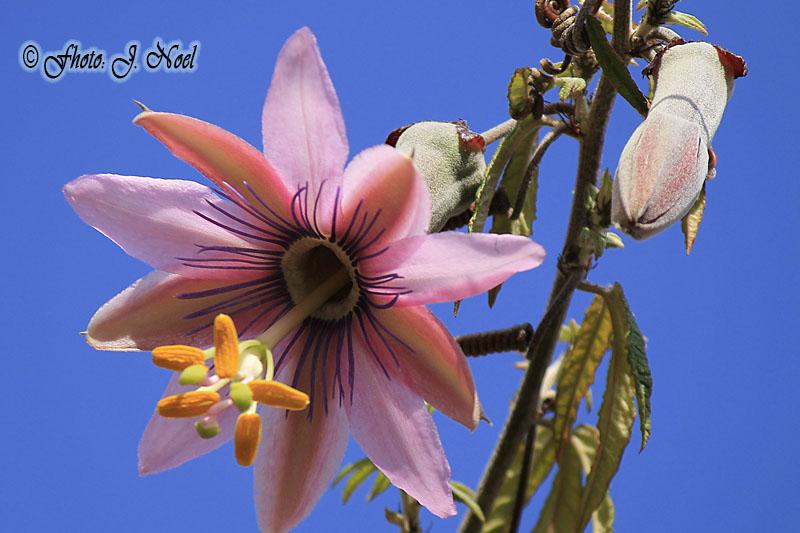 https://easy-exposure.com/wp-content/uploads/2012/09/t2364-passion-flower.jpg